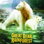 velky medv di prales great bear rainforest