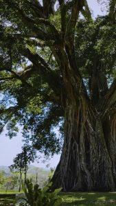 genialni stromy trees a global superpower