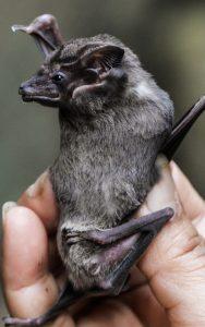 na pokraji ndash netopy i on the brink ndash bats